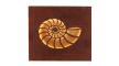 LED-Wandleuchte Nevis in rostfarbig, Ammonit