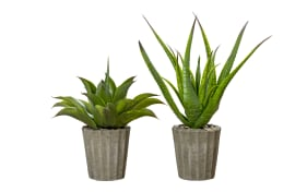 Topfpflanze Agave in grün, 50 cm