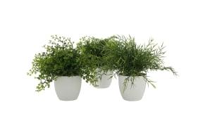 Topfpflanze, 25 cm