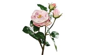 Rose mit einer Blüte in pink, 46 cm