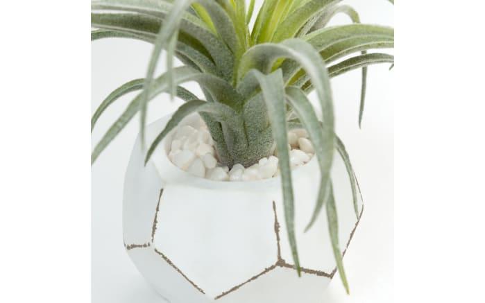 Pflanze Air grass, 13 x 13 x 13 cm
