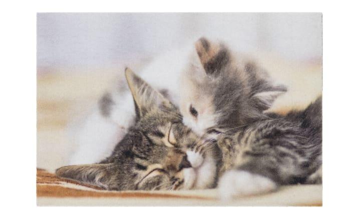 Türmatte Kitten, 40 x 60 cm
