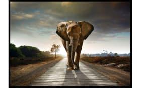 Gerahmtes Bild Taira mit Motiv: Elefant, 100 x 140 cm