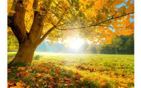 Deko-Paneel Jad, Motiv: Herbst, 68 x 98 cm