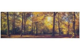 Leinwandbild Cleo, Motiv: autumn forest, 50 x 150 cm