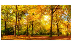 Deko-Paneel Grap, Motiv: sunny forest, 50 x 100 cm