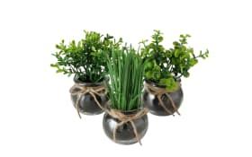Topfpflanze Ester in grün, 15 cm
