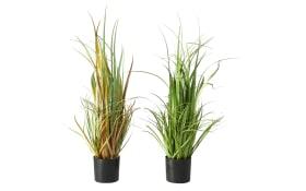 Topfpflanze, 80 cm
