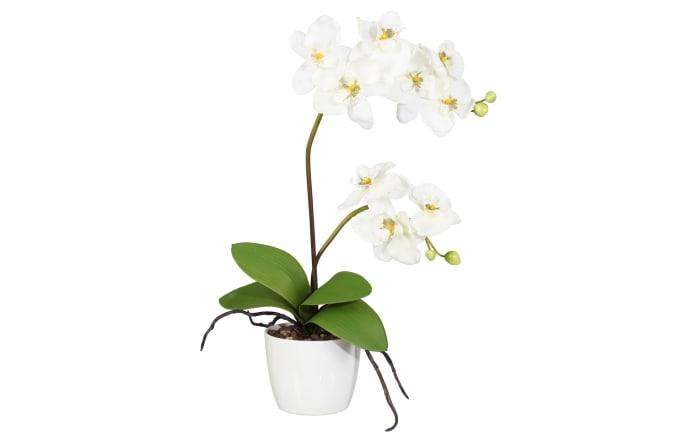 Orchidee Phalaenopsis in creme, 60 cm