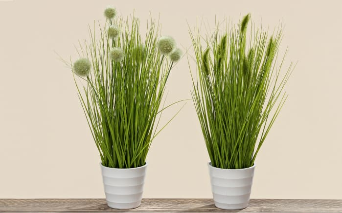 pflanze im topf in gr n 44 cm online bei hardeck kaufen. Black Bedroom Furniture Sets. Home Design Ideas